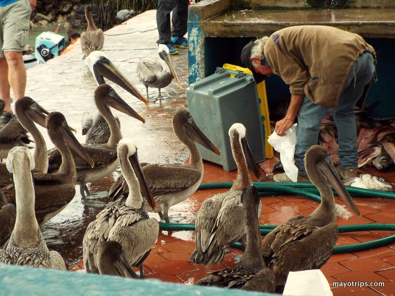 mercado galapagos